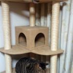 我が家で使用しているおすすめ2本つっぱりタイプのキャットタワーご紹介