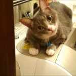 【猫動画】 お風呂あがると♂猫ピースくんが洗濯機の上でふみふみしてお出迎え♪