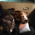 千葉県の内房方面にふらりと車中泊旅行中