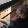 ひなたぼっこ中にパパになでなでされてご満悦な♂猫ピースくん