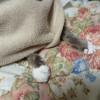 毛布にくるまって姿が見えないニャンズ