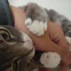 パパの手を4点ブロックする♂猫ピースくん