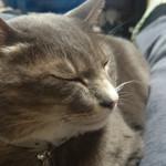 猫は笑うのか? 笑顔な♂猫ピースくん