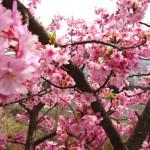 20150303日帰り旅行記5 松田山の帰り道でまたみかん購入し、河原で軽くお散歩