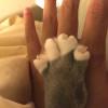 パパの手の上に自分の手を置いて大きさを張りあう♂猫ピースくん