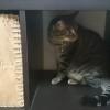 ♀猫ハッピーちゃんの猫パンチ