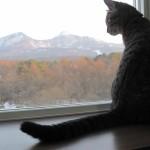 磐梯山と♀猫ハッピーちゃんの写真
