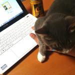 パソコン作業を邪魔する♂猫ピースくん その4 すごく邪魔だけどかわいいバージョン
