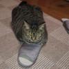 猫ってどうして足が好きなんでしょう? 謎です・・・