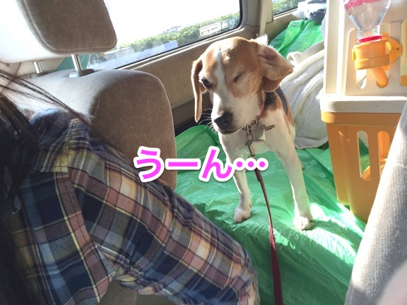 hapeace_May_13_201504