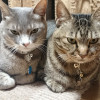 2匹並んだかわいい猫写真を撮ろうとしたが…失敗