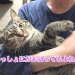 ♀猫ハッピーちゃんのダイエット記「あたちガンバル!」〜2週間経過〜