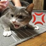 ぼくらのブラッシング戦争(猫バージョン)
