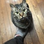 足を踏むのは猫の文化なのか?