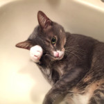 夏になると洗面台を猫に占拠される家はきっとたくさんあると思う