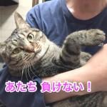 ♀猫ハッピーちゃんのダイエット記「あたちガンバル!」〜4週間経過〜