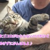 ♀猫ハッピーちゃんのダイエット記「あたちガンバル!」〜5週間経過〜