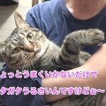 ♀猫ハッピーちゃんのダイエット記「あたちガンバル!」〜6週間経過〜