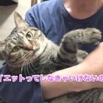 ♀猫ハッピーちゃんのダイエット記「あたちガンバル!」〜7週間経過〜