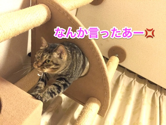 hapeace_Aug_07_201502