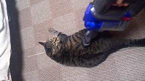 ダイソンで吸われて喜ぶ猫_snapshot_2