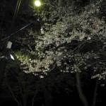 20140427車中泊旅行記19 福島県喜多方市にある道の駅「喜多の郷」で、夜のお花見しました