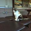 道の駅はがに住んでる猫ちゃんと戯れて、温泉につかる(20150503車中泊旅行12)
